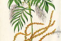 Botanical Inspiration / Work I like by other artists....