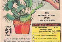 carnivorous plants♡