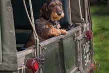 jacht honden