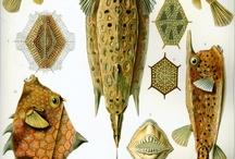 Fishes prints / Рыбы в рисунке