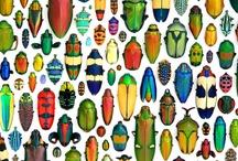 Beetles And Bugs