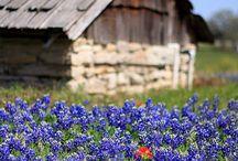Texas / by Shannon Frazeur
