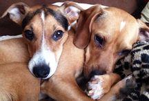 Romeo&Gara / Desde que los enanos se conocieron, se han hecho inseparables. Además, los dos juntos son el doble de tiernos y el doble de amorosos :-)