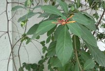 Plant Colllection / Collection of tropical trees, shrubs, climbers, ground covers and house plants