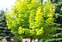 drzewa ogród