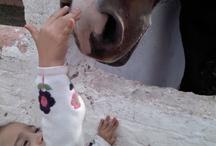 Caballos / Todo de caballos