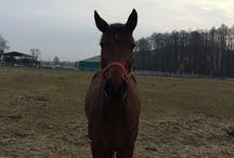 KONIE 2015-02-24 / spotkanie z koniami