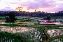 UBUD / Bali, Indonesia / by Bruno Ferret