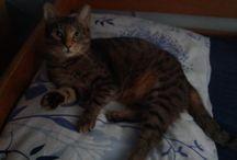 Emma / My cat