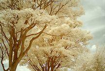 Trees / by Melinda Wilson