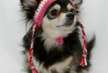 Canine Cappery / A Pet to Pat in a Hat, Fancy that!