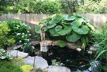 for my backyard / by Jackie Osborn