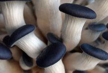Shrooms / Mushrooms