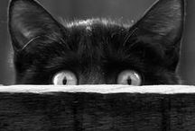 Black Cats / by KC Porter