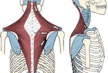 Anatomy quiz pics