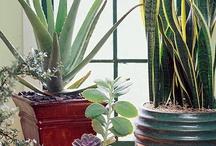 Houseplants / by Lakshmi Arvind