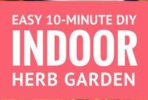 Edible Garden ideas