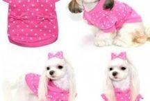 Puppy stuff / Pets
