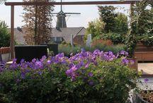 Daktuinen en dakterrassen / Een compleet sfeervol ingerichte daktuin, dakterras, balkon of patio waar u kunt genieten van rust en privacy in een groene oase op topniveau. Betegeld of met een houten vloer, op maat gemaakte plantenbakken, zelfs een vijver behoort tot de vele mogelijkheden om het dakterras naar uw wens in te richten.