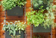 Paisagismo, Plantas, Jardins, Hortas