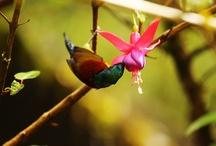 Amazing Animals & Nature