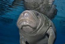 Meeressäuger