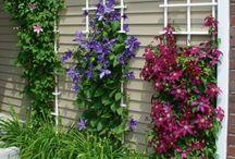 garden and decks
