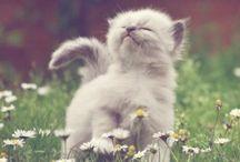 lubisz kwiatki