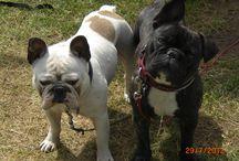 Onze doggies