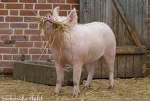 Lieblingsschweine
