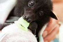 Bats with Binkies!!!