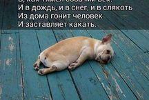 Ржака ОРУУУ