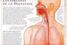 Cymone / COLOPATHIE SII Empoisonnement par les métaux en bouche. Prothèses dentaires et électrolyses