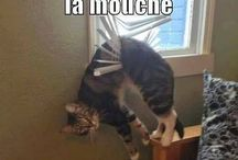 Animaux lol