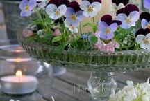 Stiefmütterchen glas