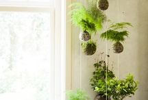 Planting ideas / For a cool green theme house