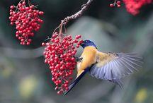 Birds / by Autumn Soleil