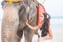 my wedding clients / Hochzeitsfotos und hochzeitsreportagen in Trier, Luxemburg, bitburg, dem Saarland und weltweit - Fotograf Frank Martini aus Trier