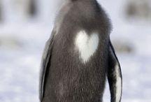 Echte pinguïns / Happiness is a...penguin.