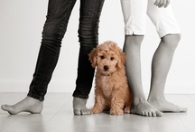 Woof.  Woof. / Fun images of pet's and their owners