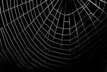 spider / by usagi nomedama