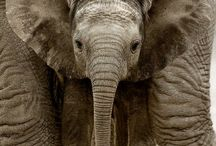 Elephants / I adore these majestic animals