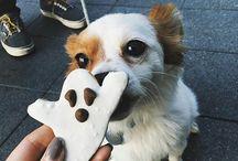 Dog Holiday:: Howloween