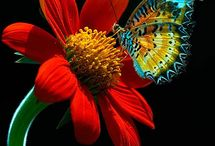 Butterfly by the Billions / The butterfly is so beautiful and so many colors! So sad their life is so short.