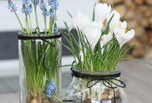 Blomster i hjemmet