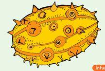 Как есть Кивано (рогатую дыню)