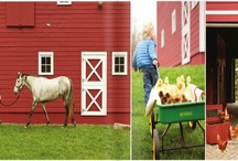 future farm / by lauren clark
