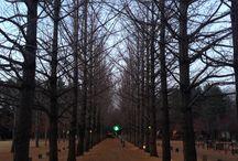 Trees / Nami Island Korea