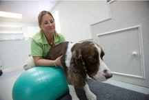 Animal Rehabilitation / by Alberta Veterinary Medical Association