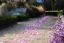 Real Rose Petal Confetti